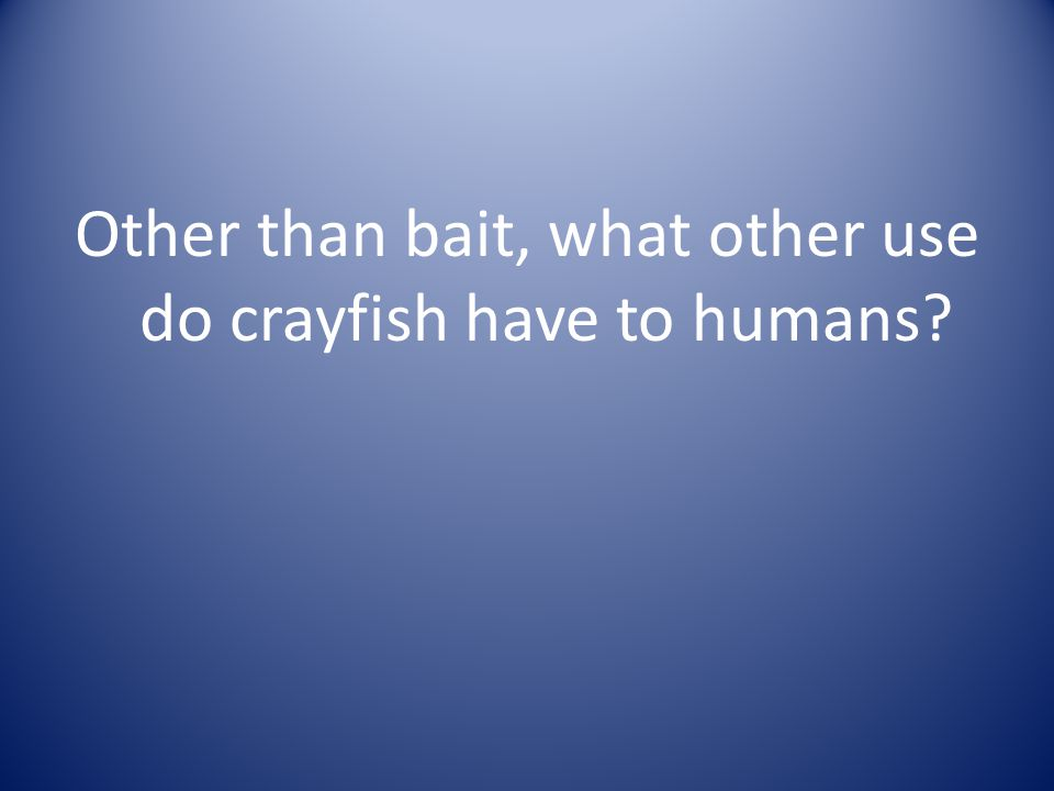 Other than bait, what other use do crayfish have to humans