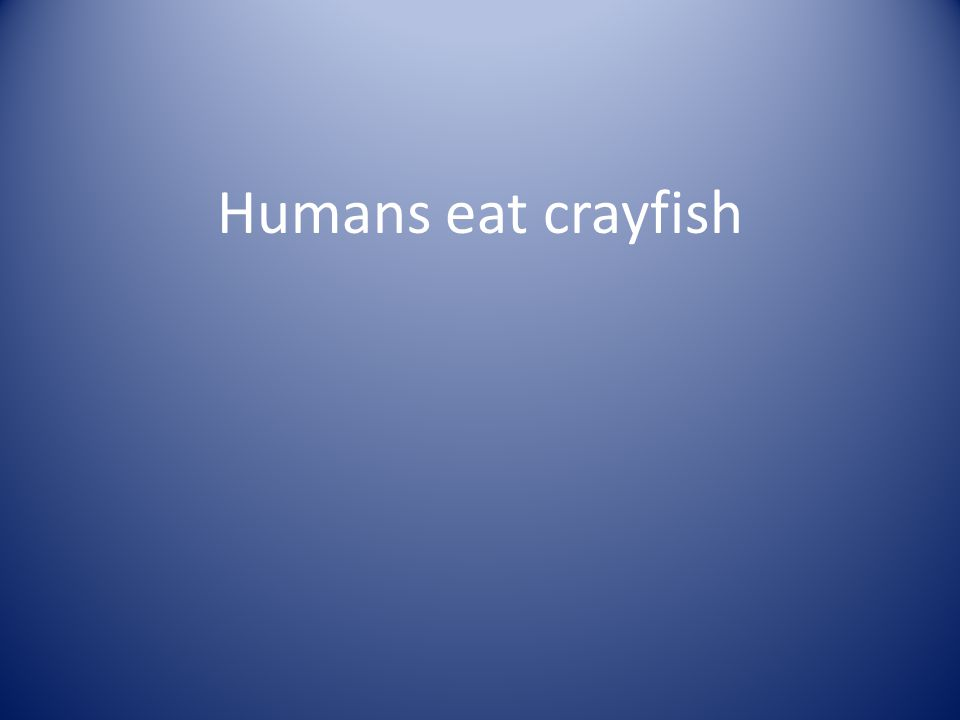 Humans eat crayfish