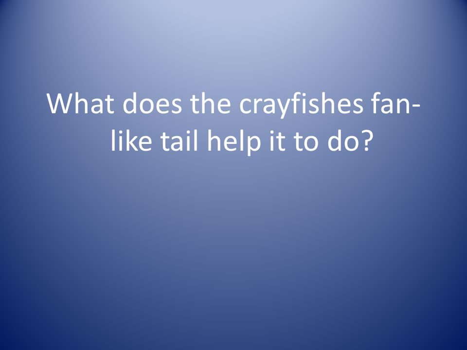 What does the crayfishes fan-like tail help it to do