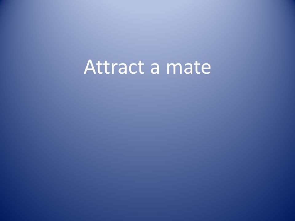 Attract a mate