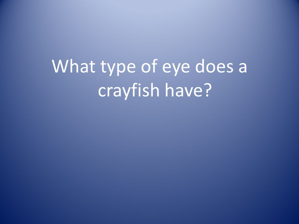 What type of eye does a crayfish have