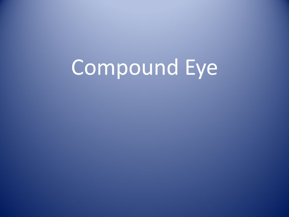 Compound Eye