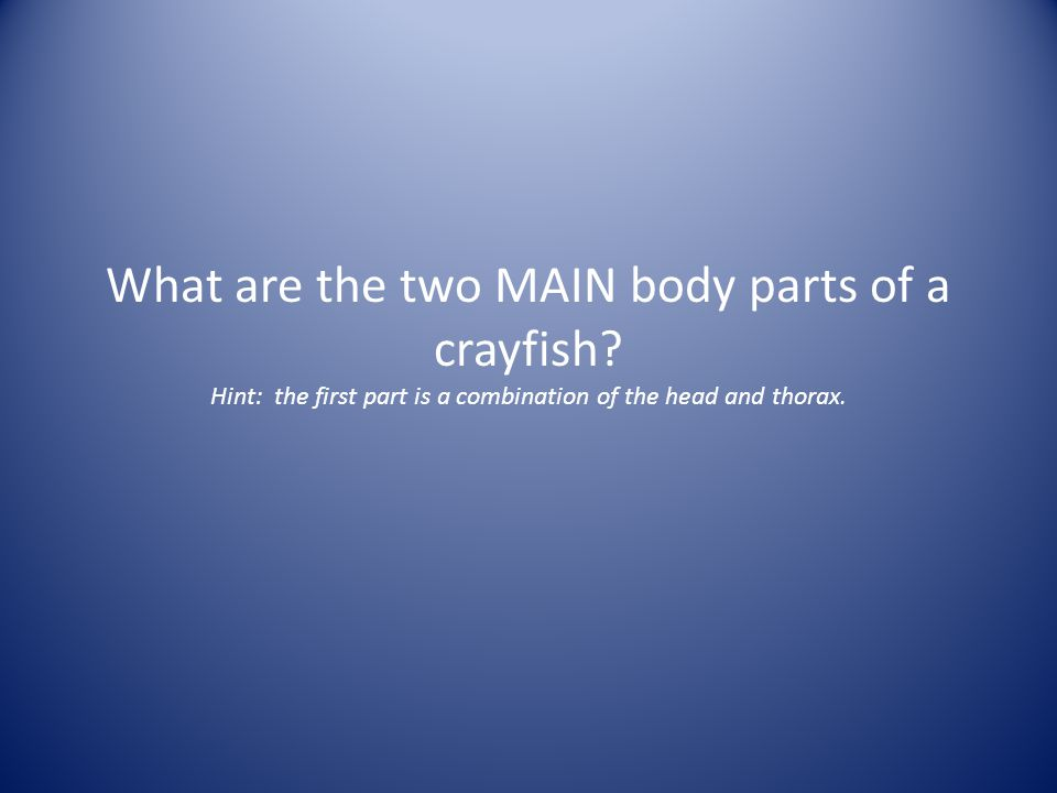 What are the two MAIN body parts of a crayfish
