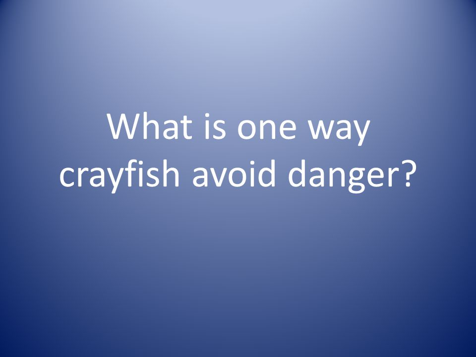 What is one way crayfish avoid danger