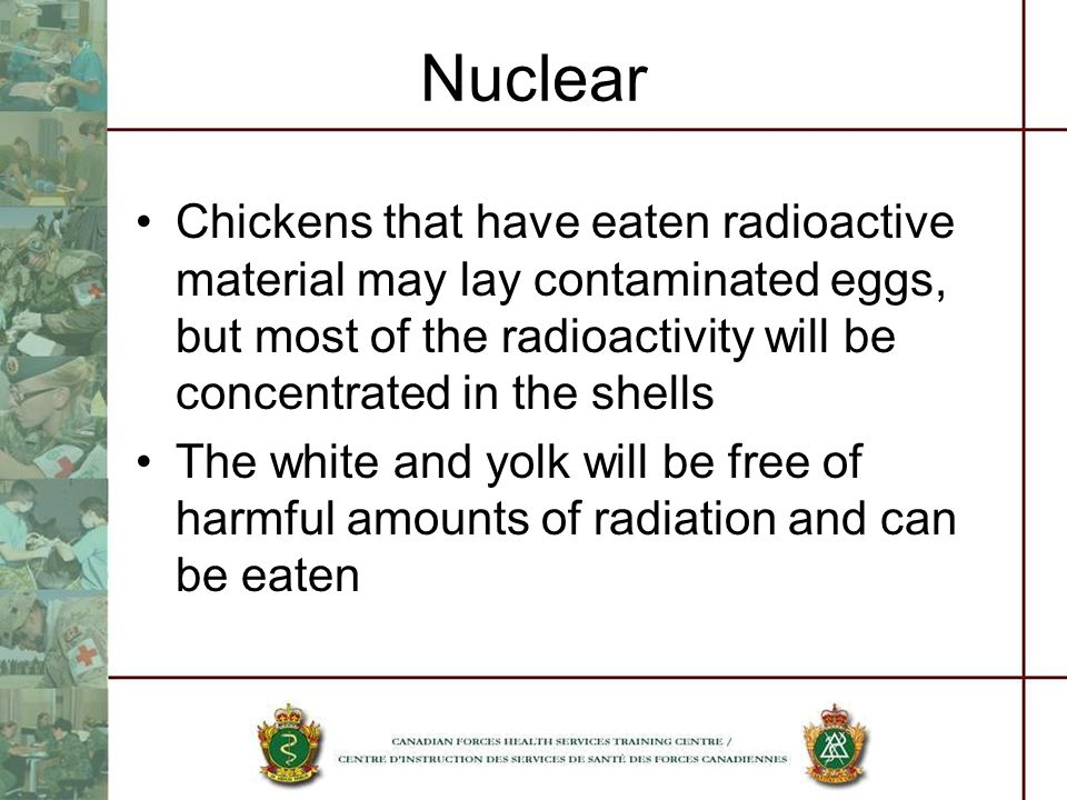 Nuclear Chickens that have eaten radioactive material may lay contaminated eggs, but most of the radioactivity will be concentrated in the shells.
