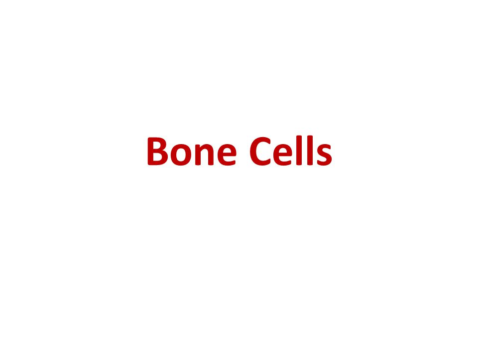 Bone Cells