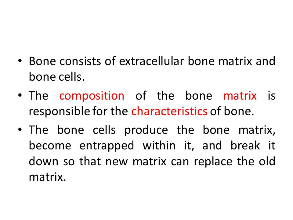 Bone consists of extracellular bone matrix and bone cells.