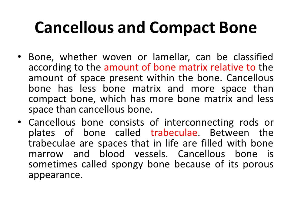 Cancellous and Compact Bone
