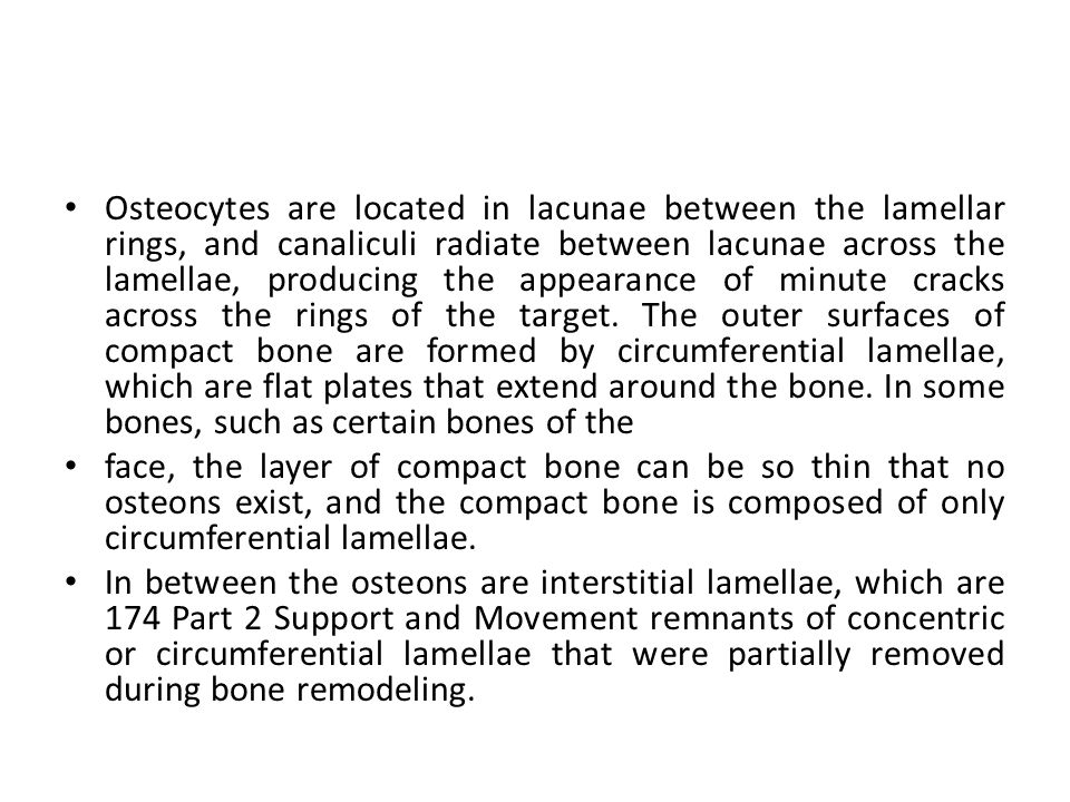 Osteocytes are located in lacunae between the lamellar rings, and canaliculi radiate between lacunae across the lamellae, producing the appearance of minute cracks across the rings of the target. The outer surfaces of compact bone are formed by circumferential lamellae, which are flat plates that extend around the bone. In some bones, such as certain bones of the