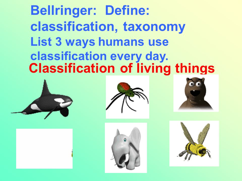 Bellringer: Define: classification, taxonomy