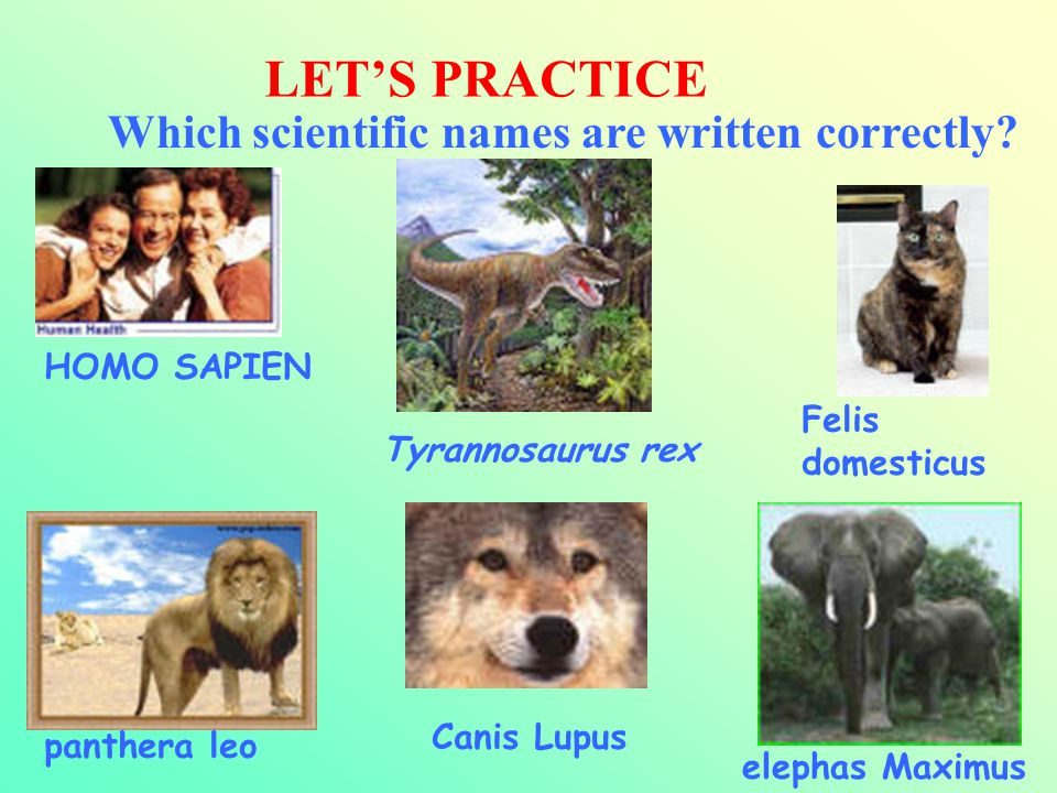 LET'S PRACTICE Which scientific names are written correctly