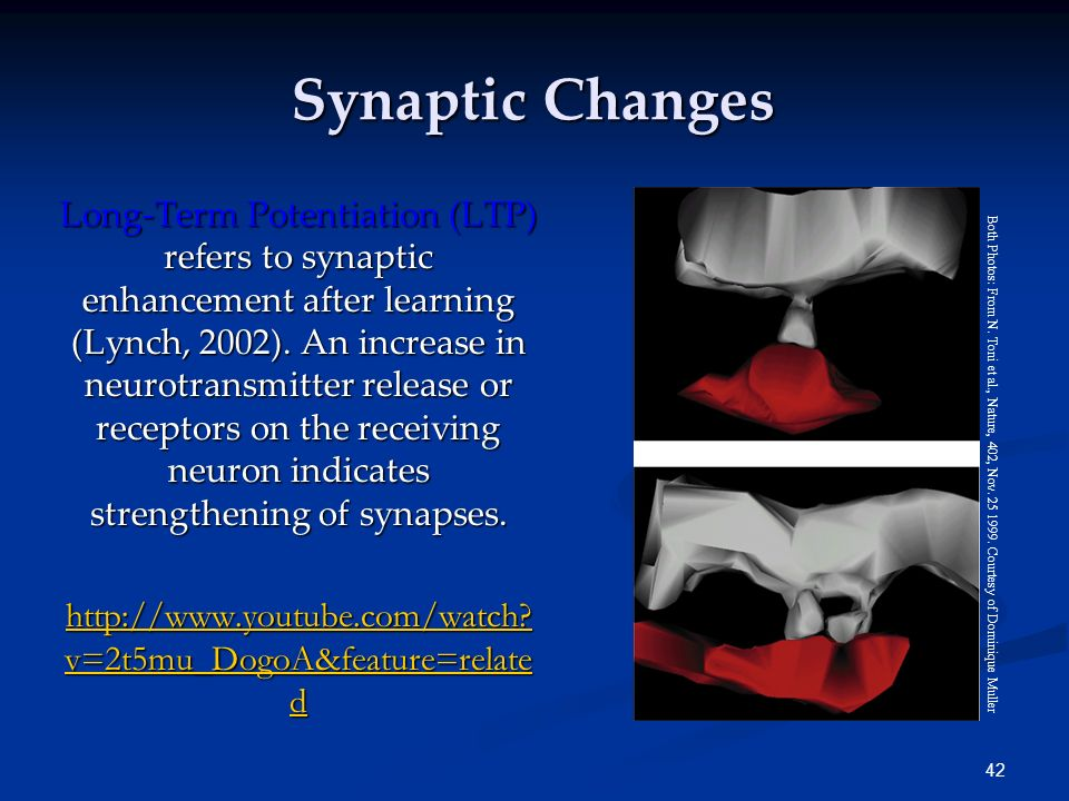 Synaptic Changes