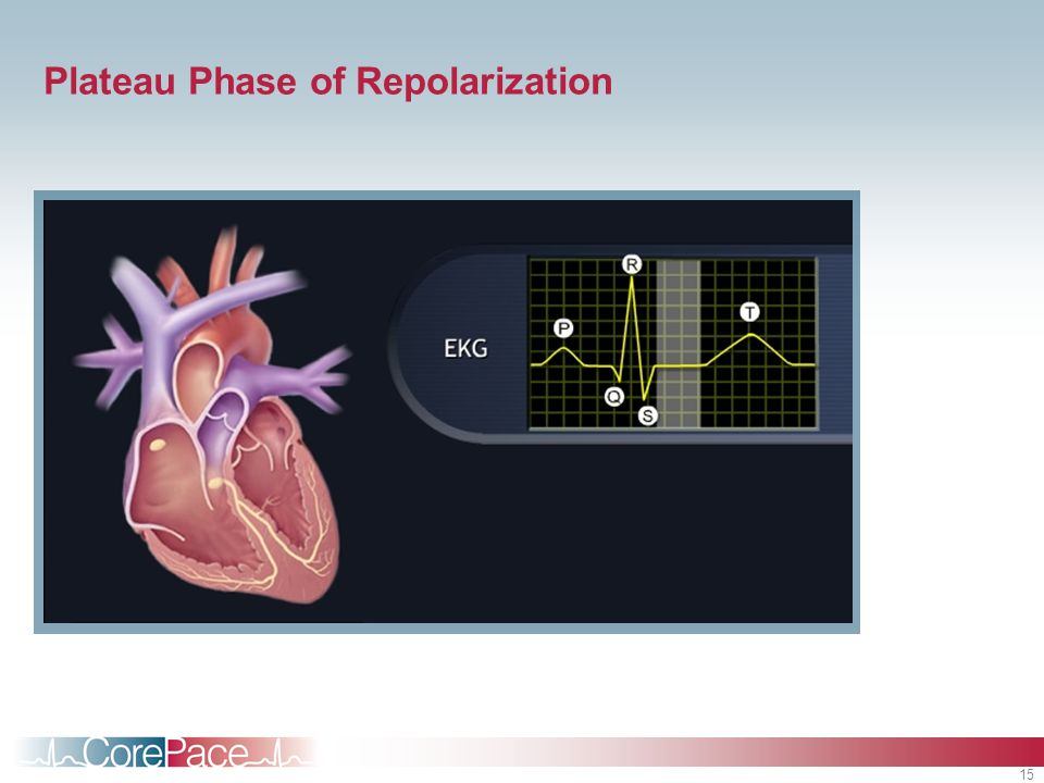 Plateau Phase of Repolarization