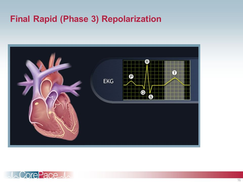 Final Rapid (Phase 3) Repolarization