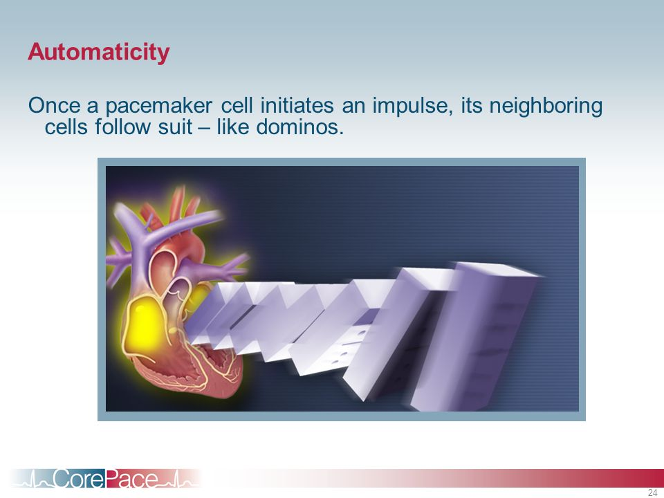 Automaticity Once a pacemaker cell initiates an impulse, its neighboring cells follow suit – like dominos.