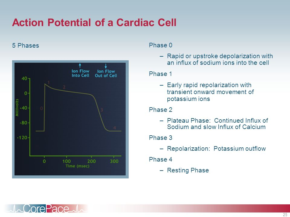 Action Potential of a Cardiac Cell