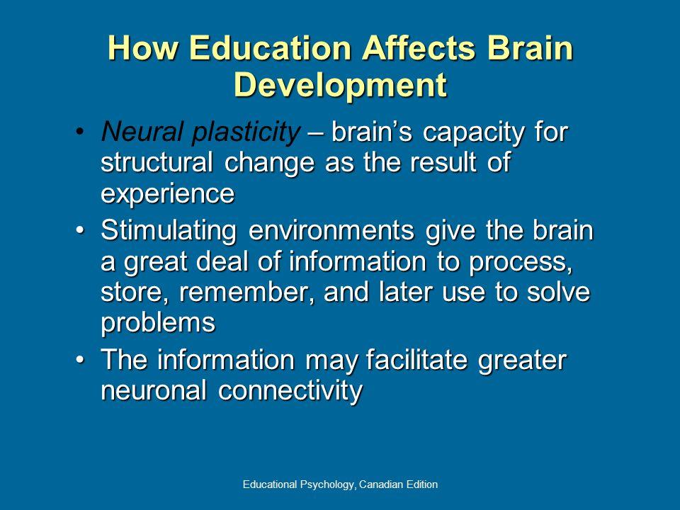 How Education Affects Brain Development