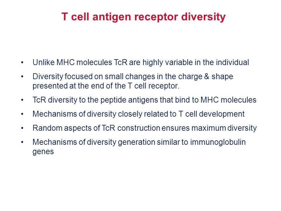T cell antigen receptor diversity