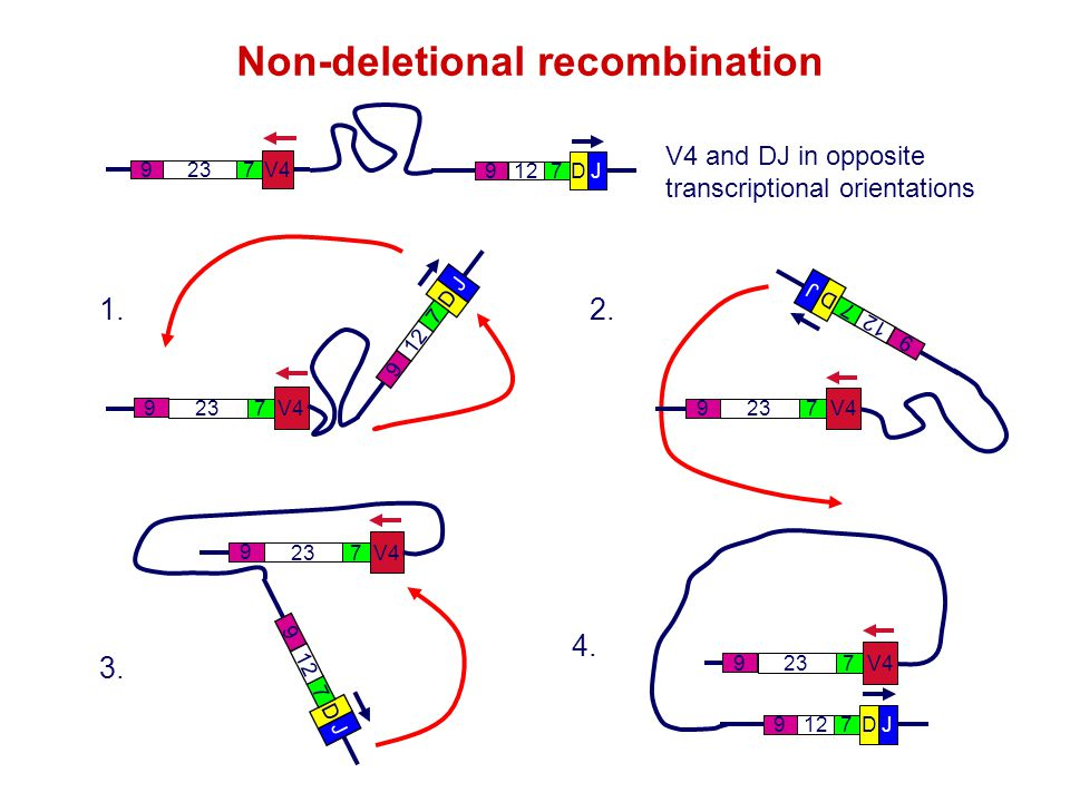 Non-deletional recombination