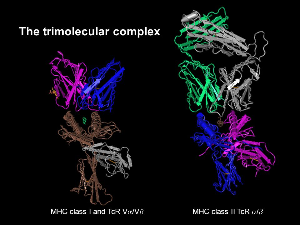 The trimolecular complex