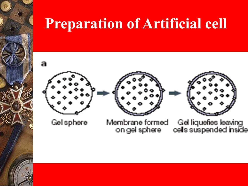 Preparation of Artificial cell
