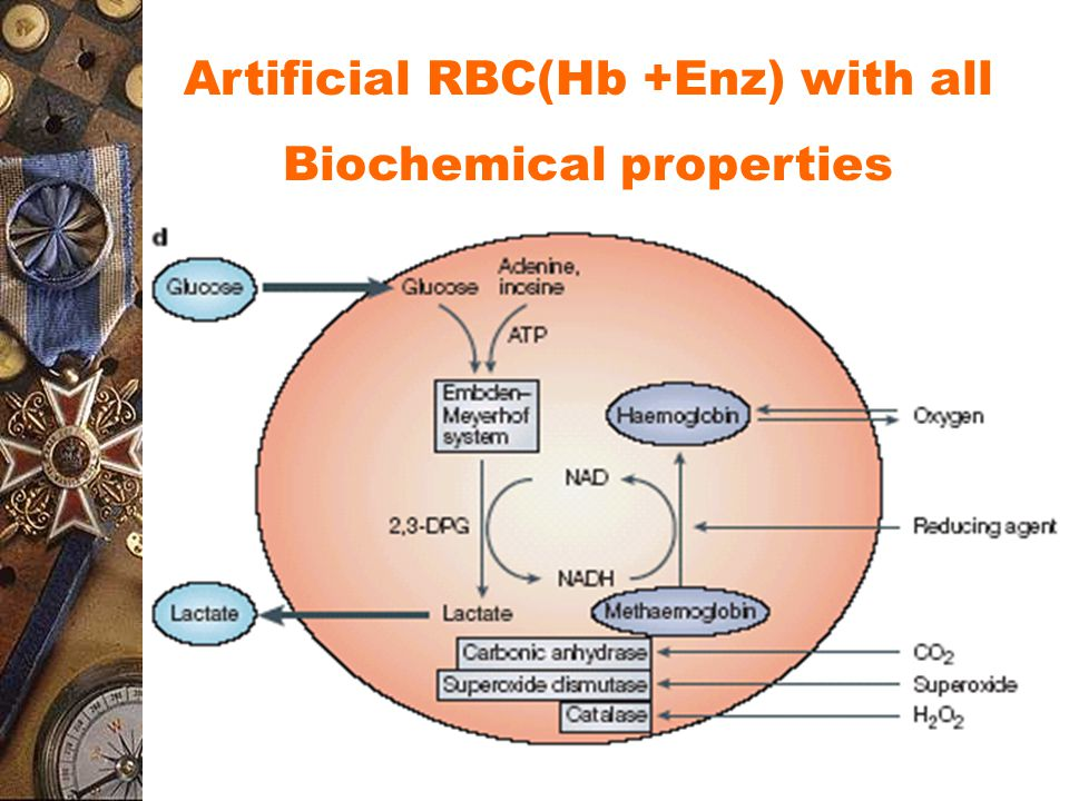Artificial RBC(Hb +Enz) with all Biochemical properties