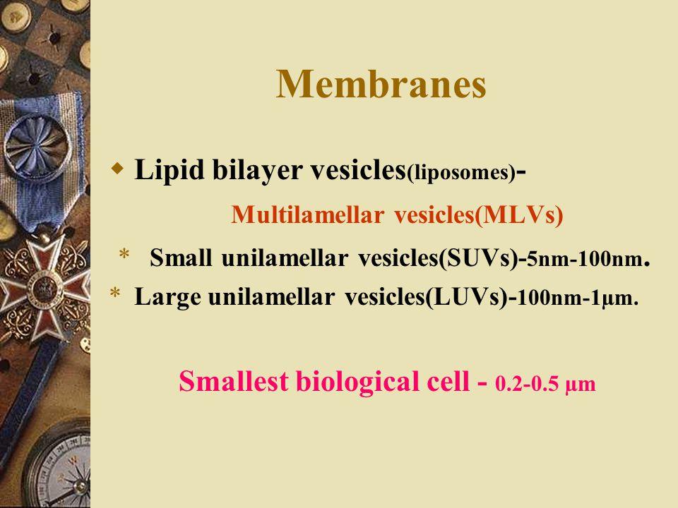 Membranes Lipid bilayer vesicles(liposomes)-