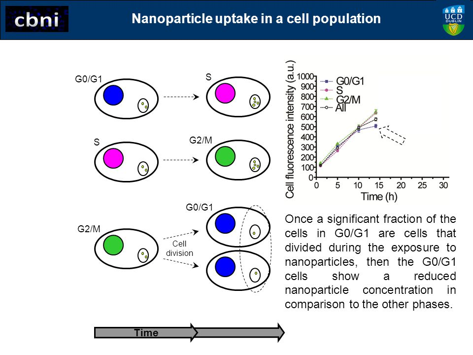 Nanoparticle uptake in a cell population