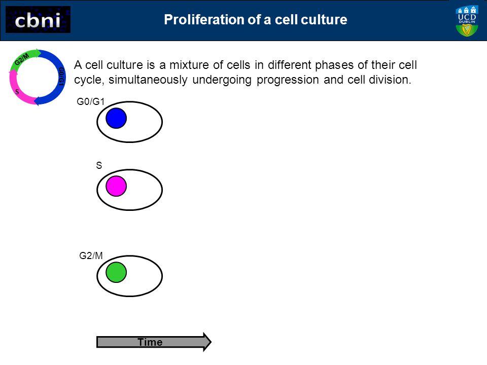 Proliferation of a cell culture
