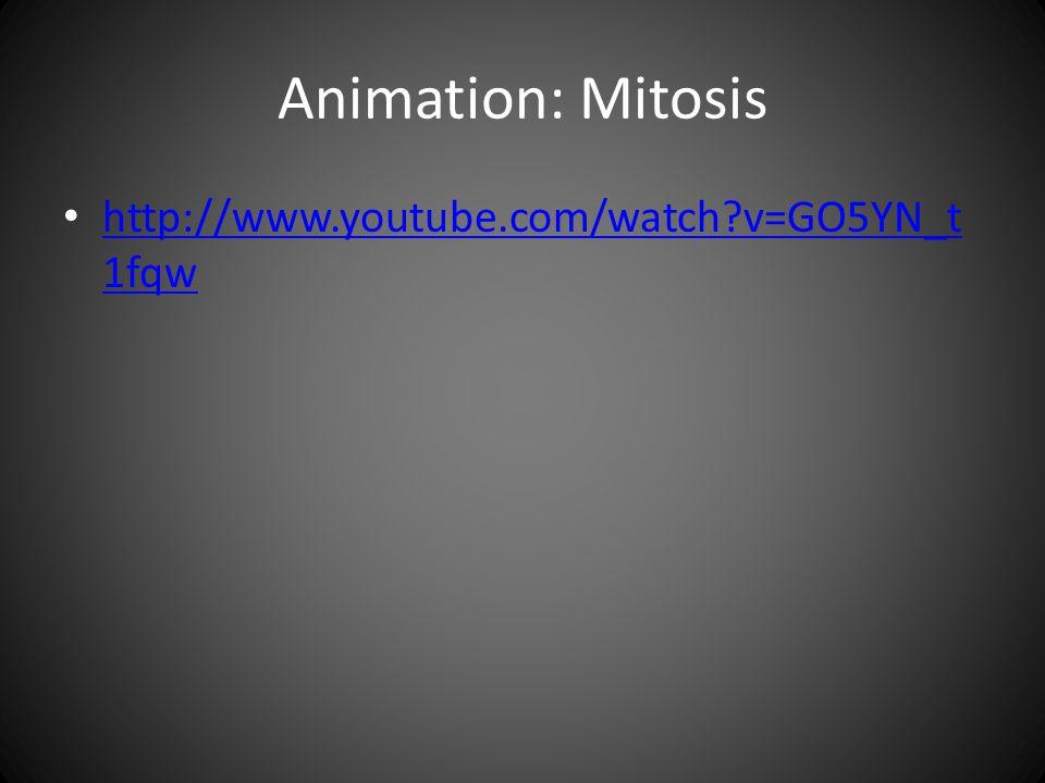 Animation: Mitosis http://www.youtube.com/watch v=GO5YN_t1fqw
