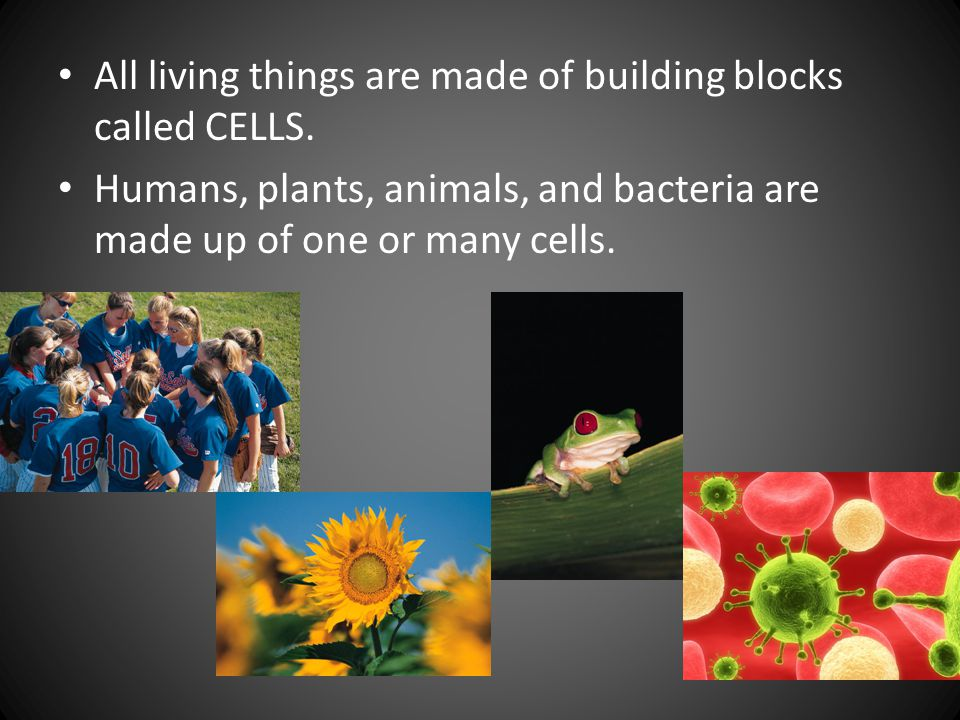 All living things are made of building blocks called CELLS.