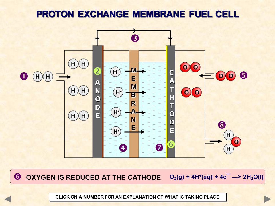         PROTON EXCHANGE MEMBRANE FUEL CELL