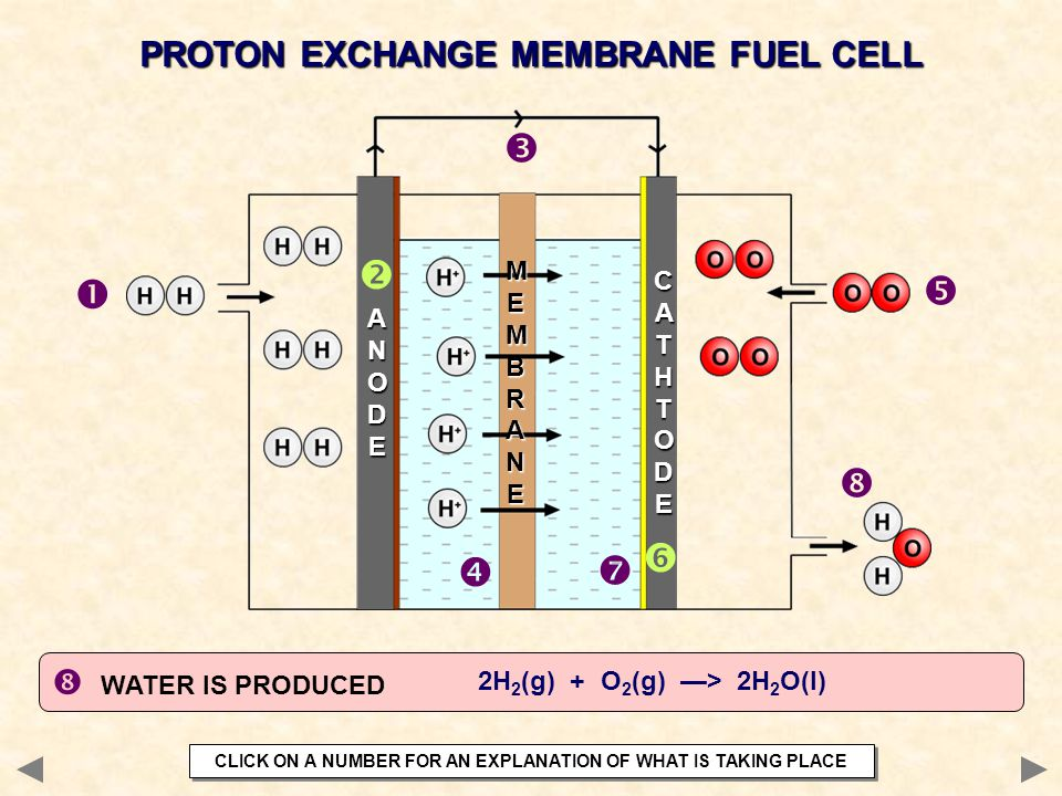         PROTON EXCHANGE MEMBRANE FUEL CELL  WATER IS PRODUCED