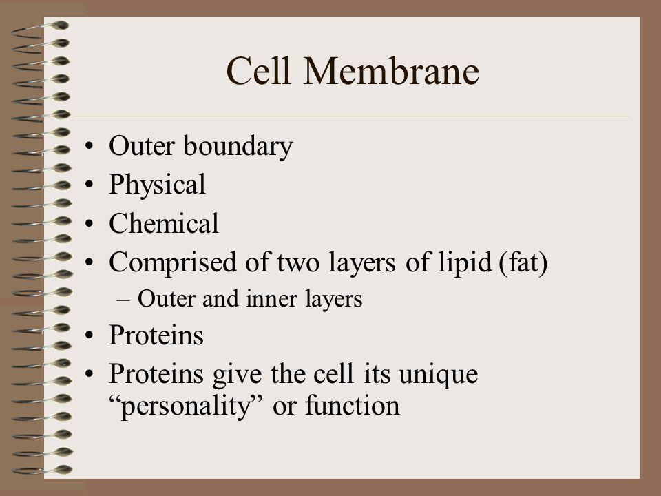 Cell Membrane Outer boundary Physical Chemical