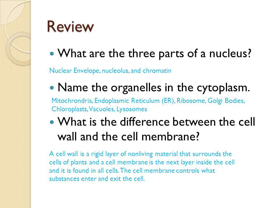Review What are the three parts of a nucleus