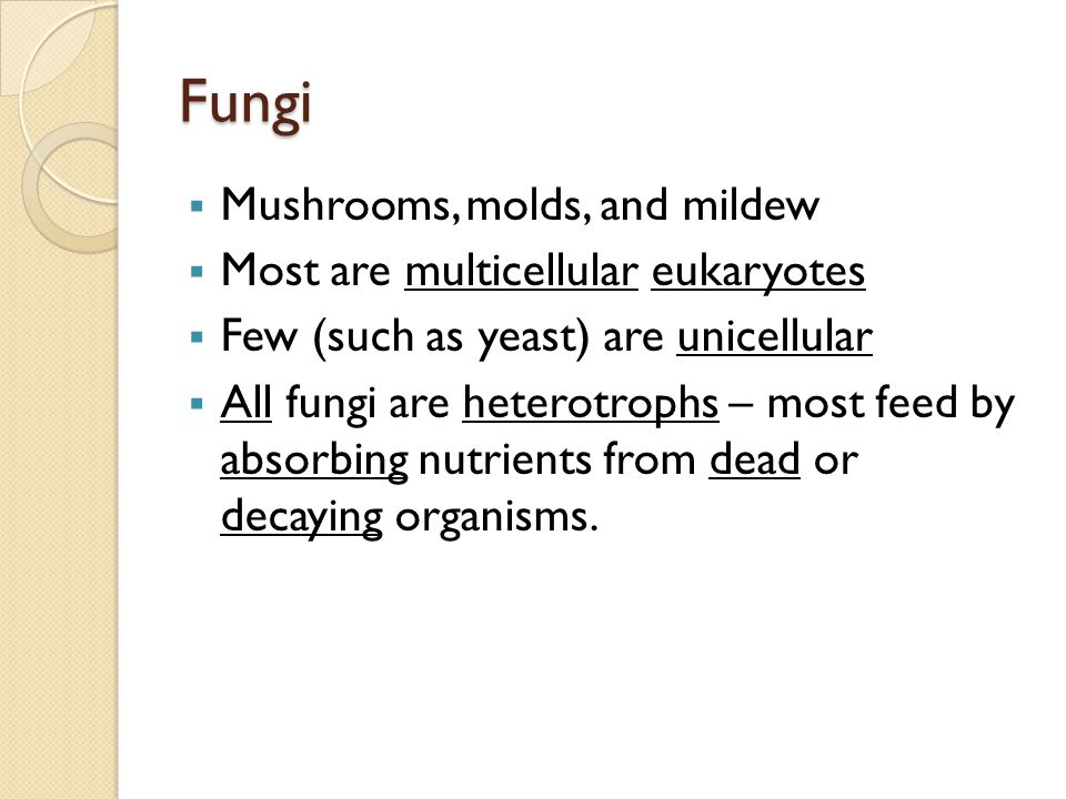 Fungi Mushrooms, molds, and mildew Most are multicellular eukaryotes