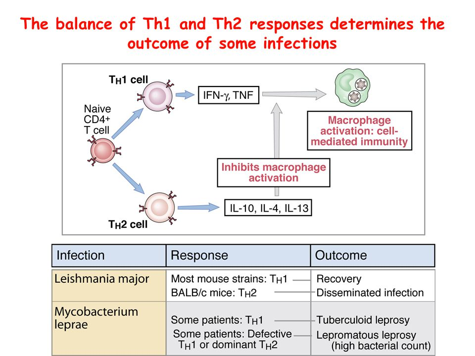 The balance of Th1 and Th2 responses determines the outcome of some infections