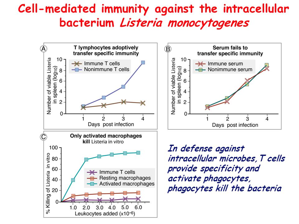 Cell-mediated immunity against the intracellular bacterium Listeria monocytogenes