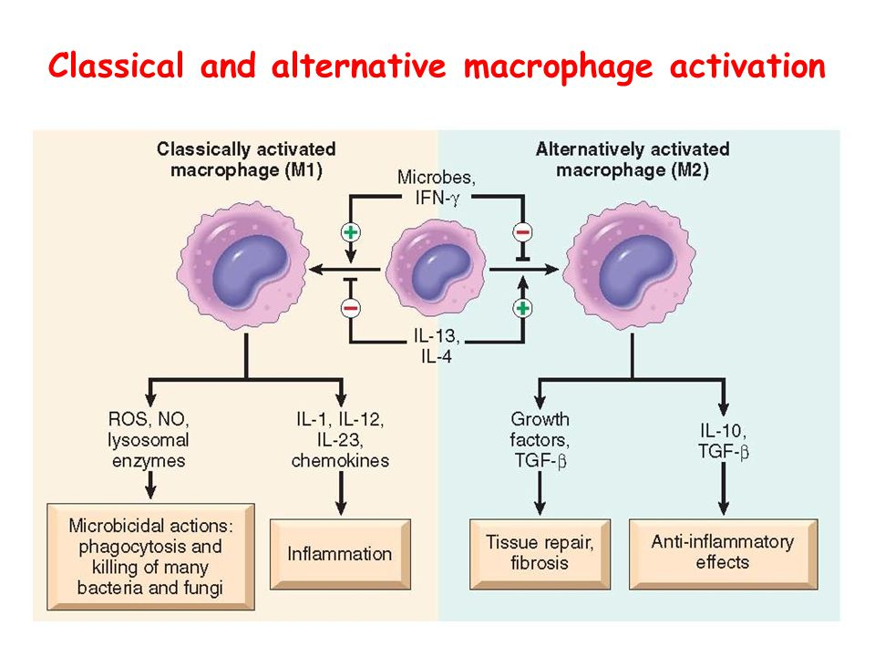 Classical and alternative macrophage activation