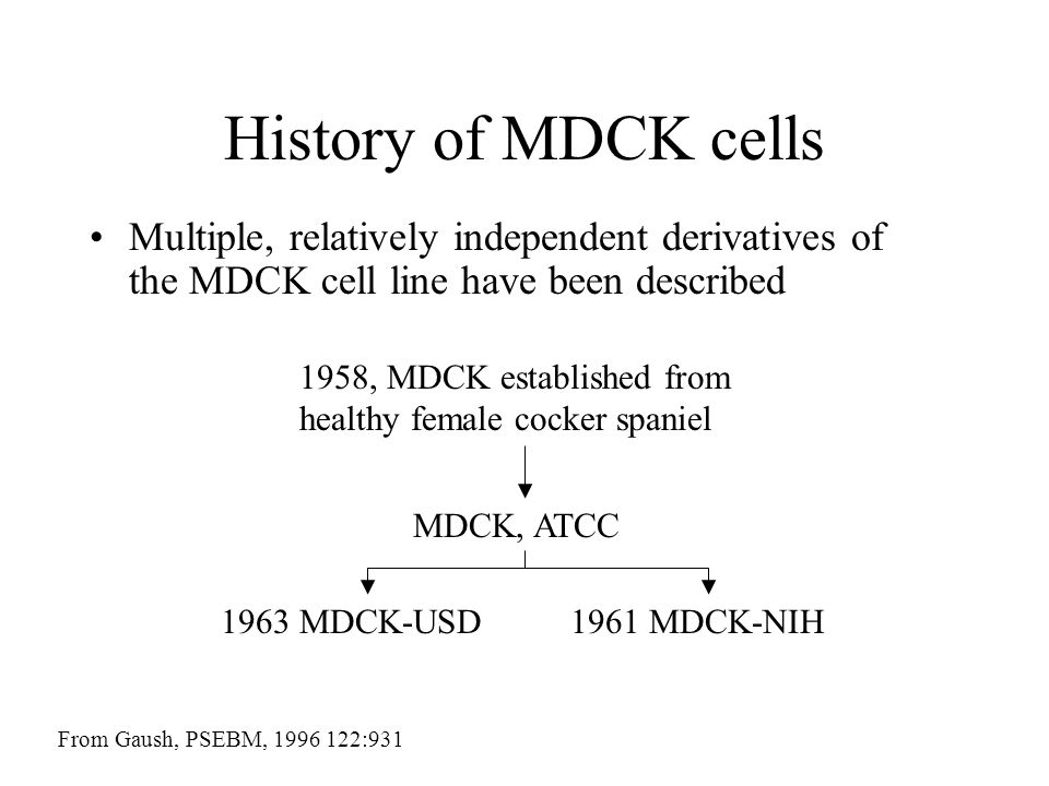 History of MDCK cells Multiple, relatively independent derivatives of the MDCK cell line have been described.