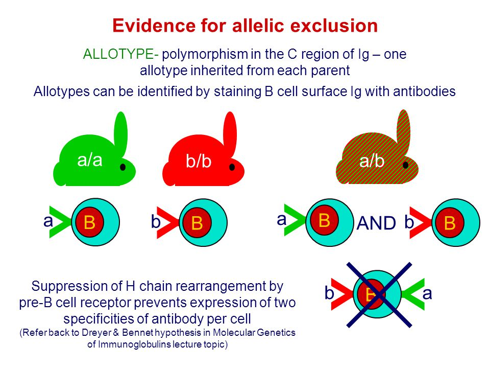 Evidence for allelic exclusion