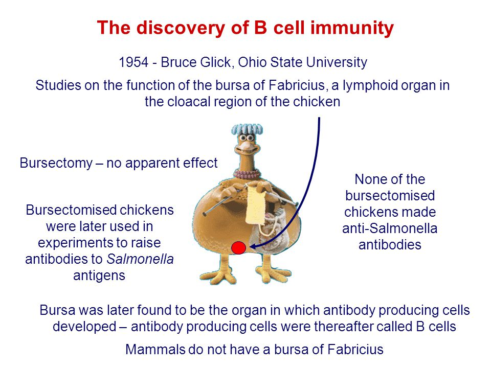 The discovery of B cell immunity