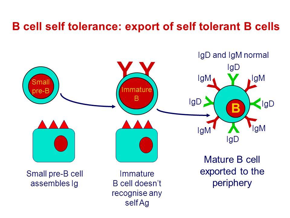 B cell self tolerance: export of self tolerant B cells