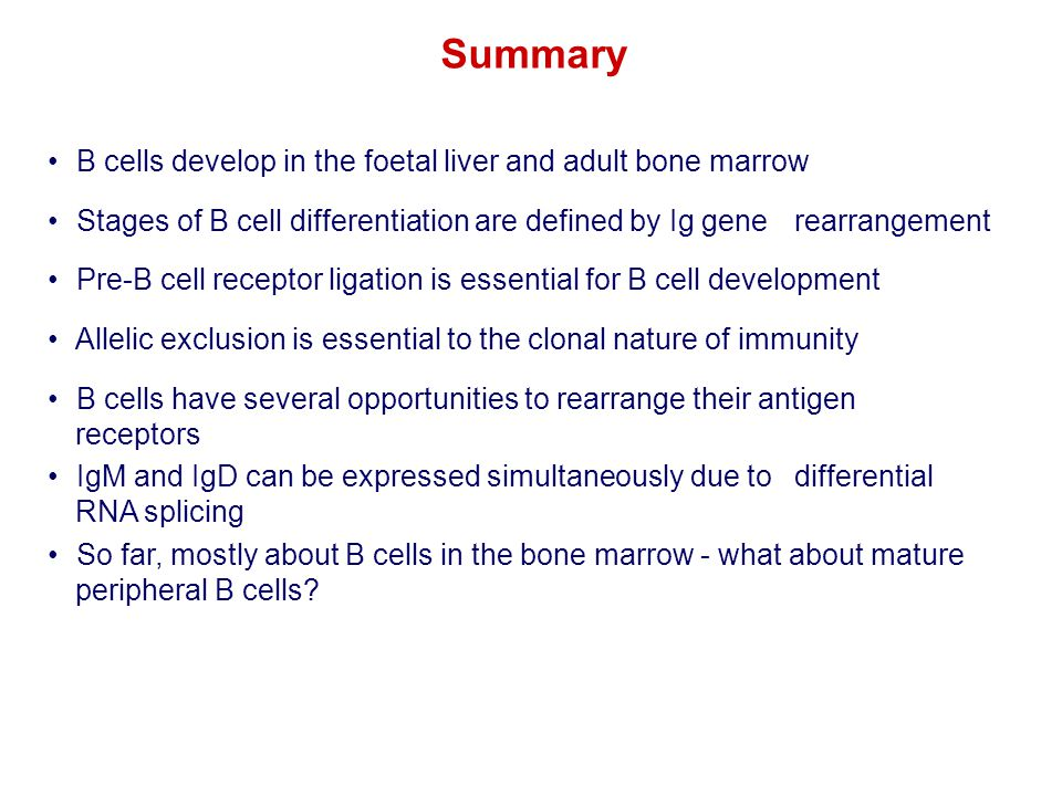 Summary B cells develop in the foetal liver and adult bone marrow