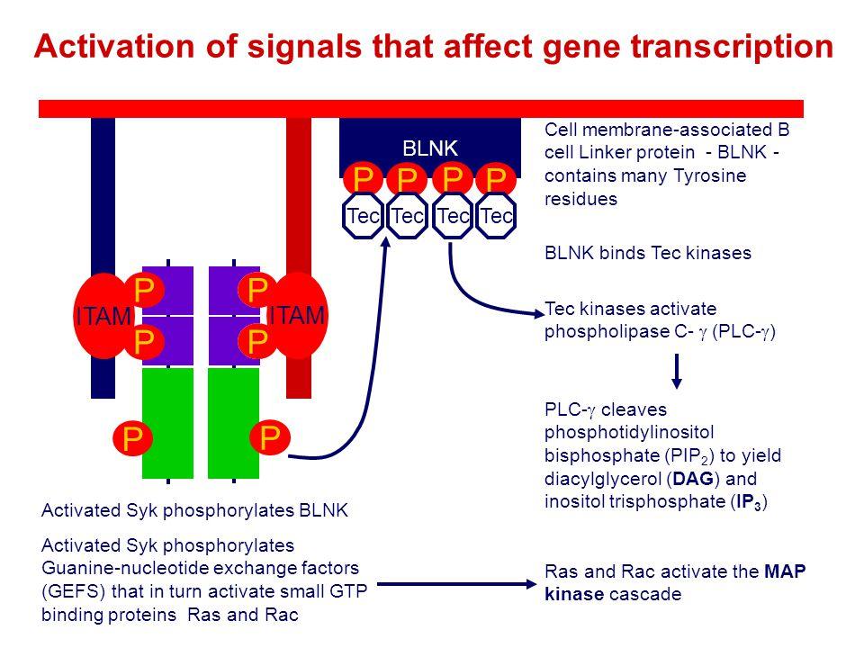 Activation of signals that affect gene transcription