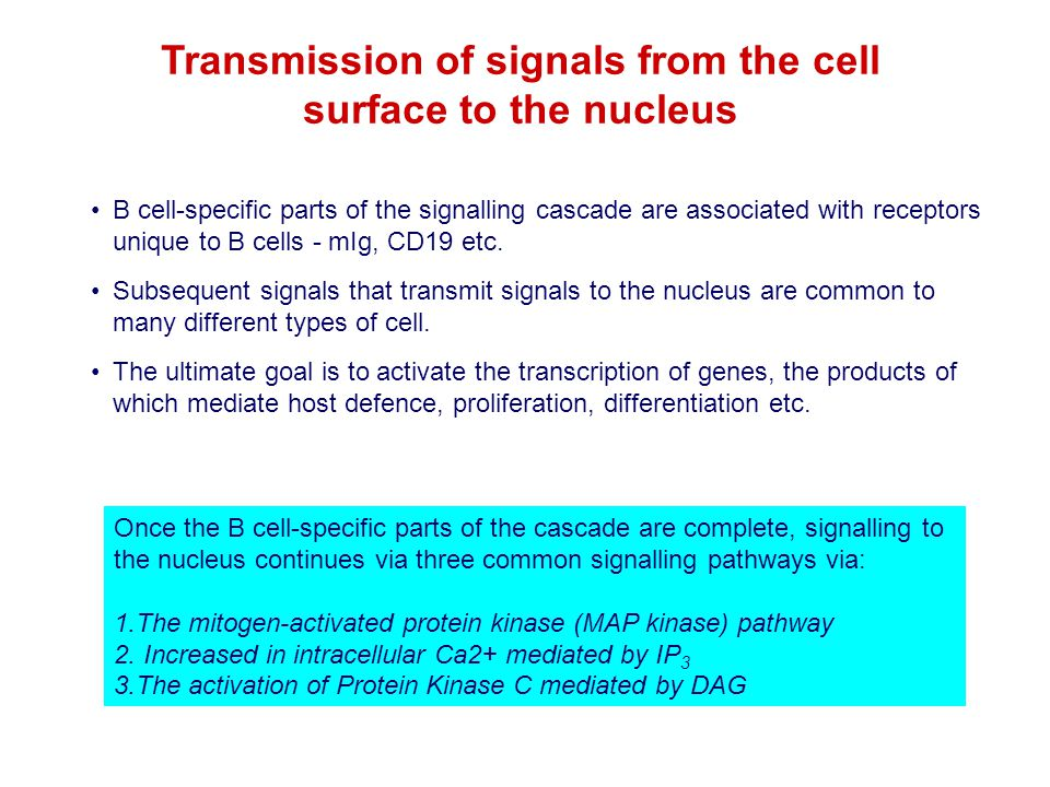 Transmission of signals from the cell
