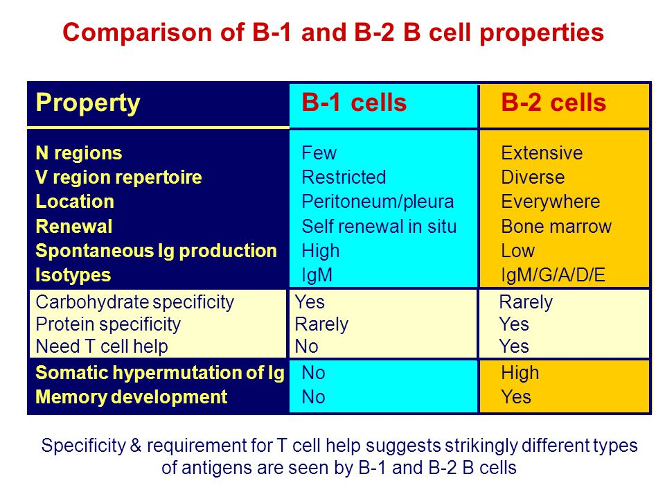 Comparison of B-1 and B-2 B cell properties