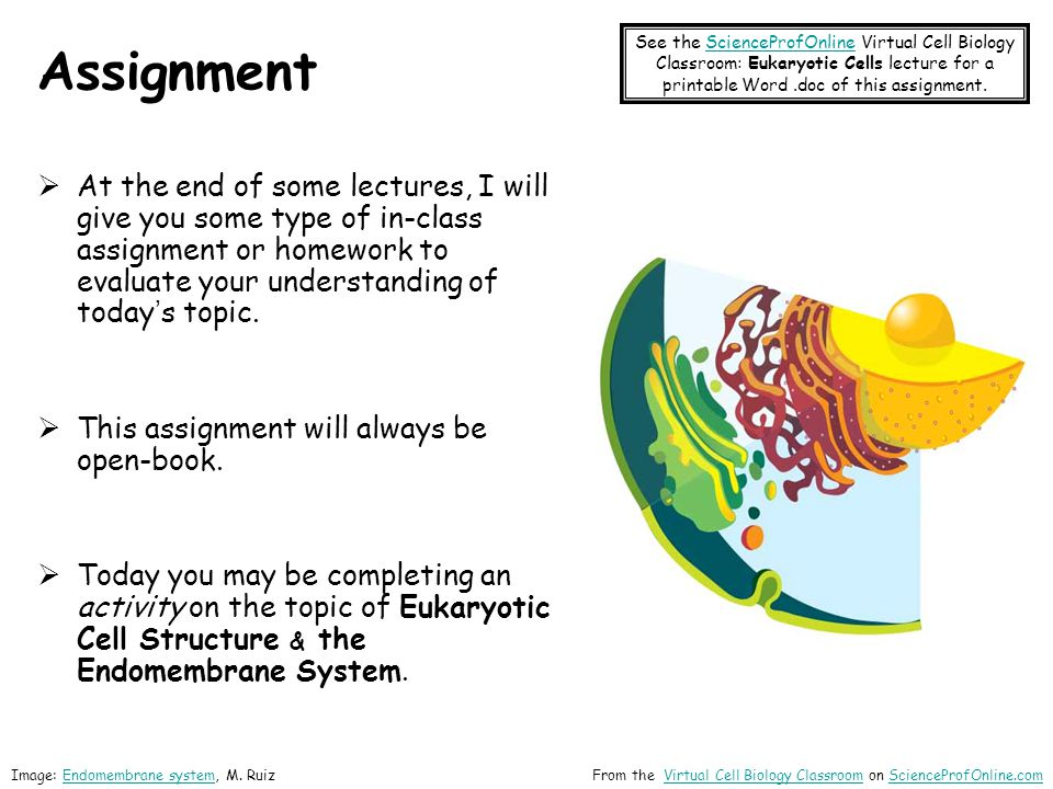 See the ScienceProfOnline Virtual Cell Biology Classroom: Eukaryotic Cells lecture for a printable Word .doc of this assignment.