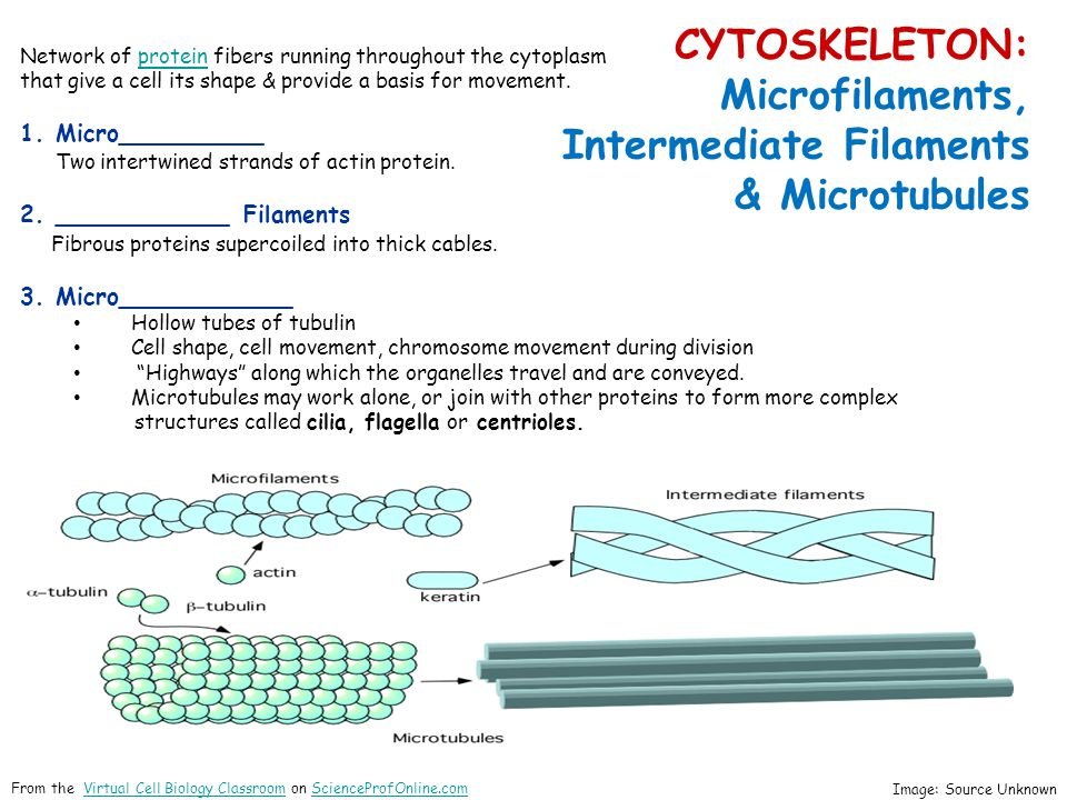 CYTOSKELETON: Microfilaments, Intermediate Filaments & Microtubules