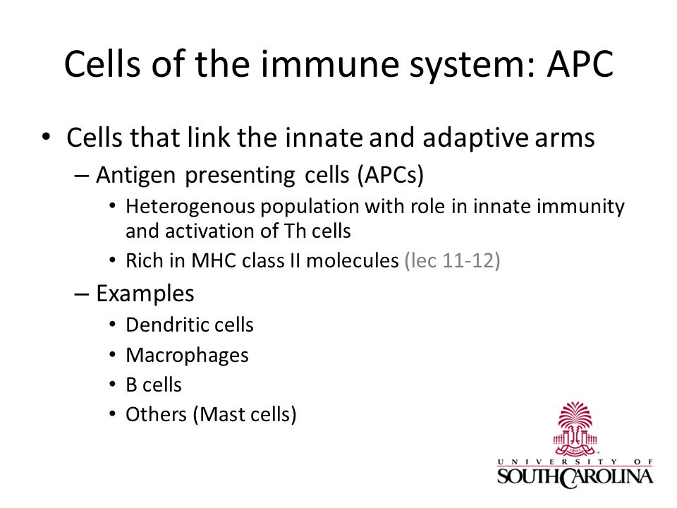 Cells of the immune system: APC